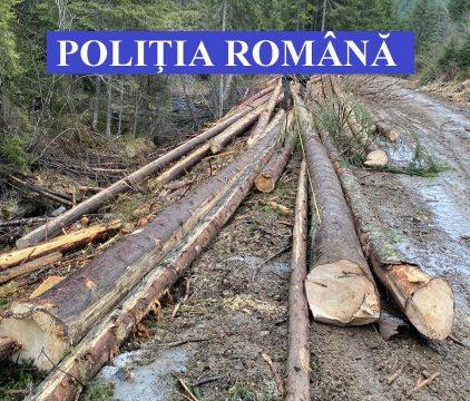 Cu sau fără ordonanțe militare, pădurea Clujului dispare încet