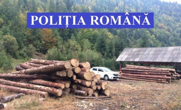 Amenzi de peste 70.000 lei, lemne confiscate după o razie a polițiștilor în județul Cluj