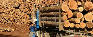 Exportul de buştean din România în spaţiul din afara UE interzis timp de 10 ani