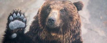 Urs văzut la Turda. Ce s-a întâmplat cu cel din Câmpia Turzii
