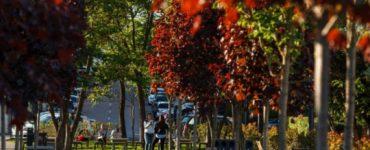 Clujul este primul oraș din fostul bloc comunist care aderă la Acordul Orașelor Verzi